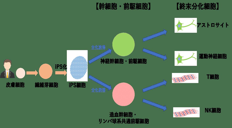 【連載】iPSの世界へようこそ ~細胞ビジネスを読み解くヒント:基礎知識編