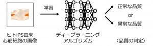 AIを用いてiPS由来分化細胞の品質を管理できるソリューションを開発